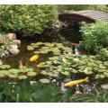 AquascapePRO AquascapePRO Medium 11' x 16' Pond Kit w/AquaSurge PRO 2000-4000