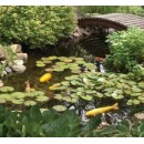 AquascapePRO AquascapePRO Medium 11' x 16' Pond Kit w/AquaSurge PRO 2000-4000